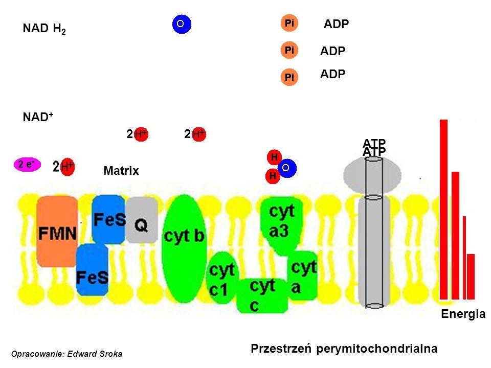 Przestrzeń perymitochondrialna