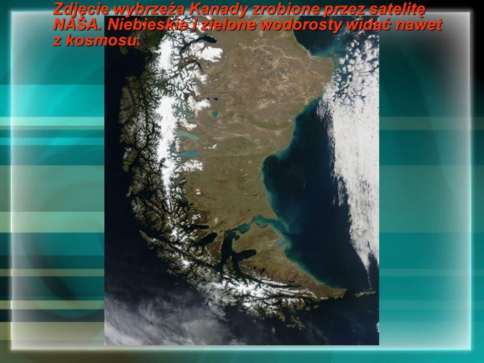 Zdjęcie wybrzeża Kanady zrobione przez satelitę NASA