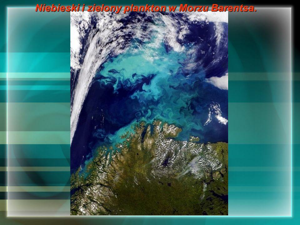 Niebieski i zielony plankton w Morzu Barentsa.