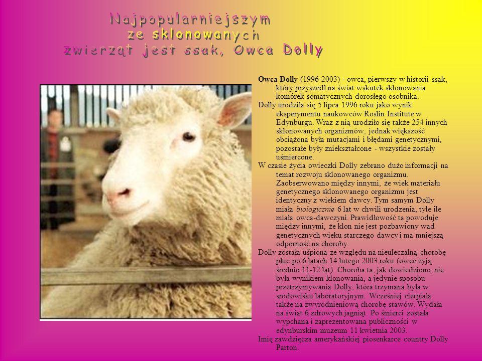zwierząt jest ssak, Owca Dolly