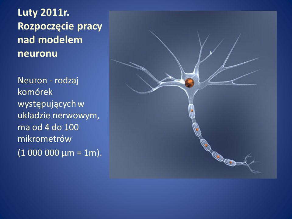 Luty 2011r. Rozpoczęcie pracy nad modelem neuronu