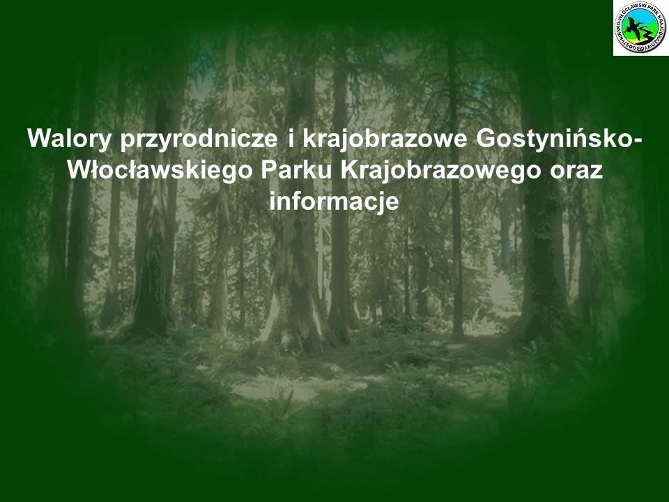 Walory przyrodnicze i krajobrazowe Gostynińsko-Włocławskiego Parku Krajobrazowego oraz informacje