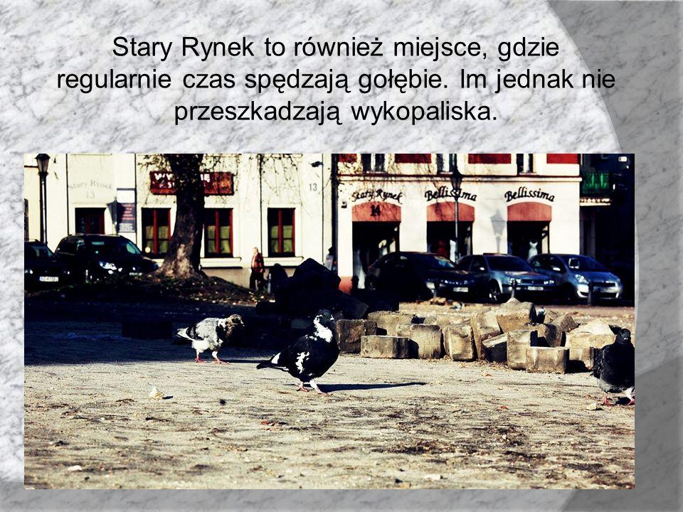 Stary Rynek to również miejsce, gdzie regularnie czas spędzają gołębie