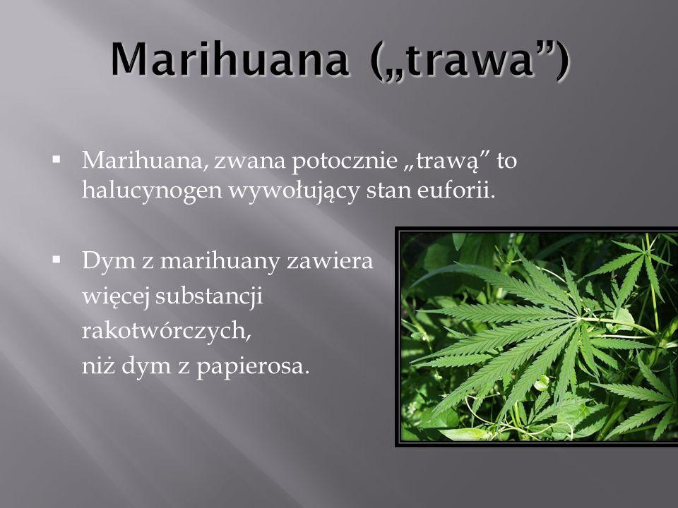 """Marihuana (""""trawa ) Marihuana, zwana potocznie """"trawą to halucynogen wywołujący stan euforii. Dym z marihuany zawiera."""