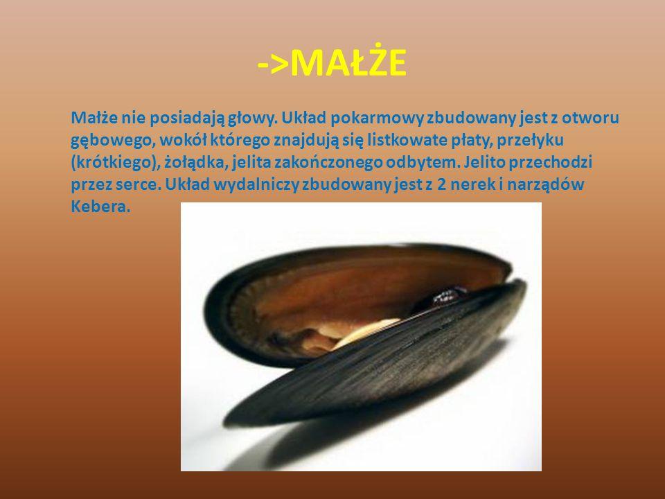 ->MAŁŻE