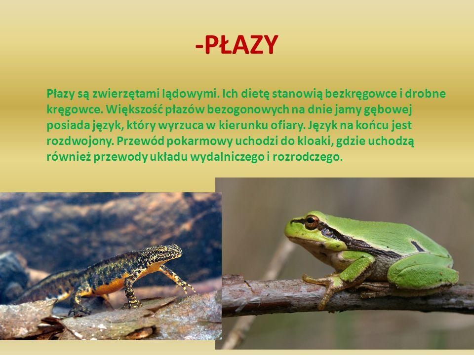 -PŁAZY