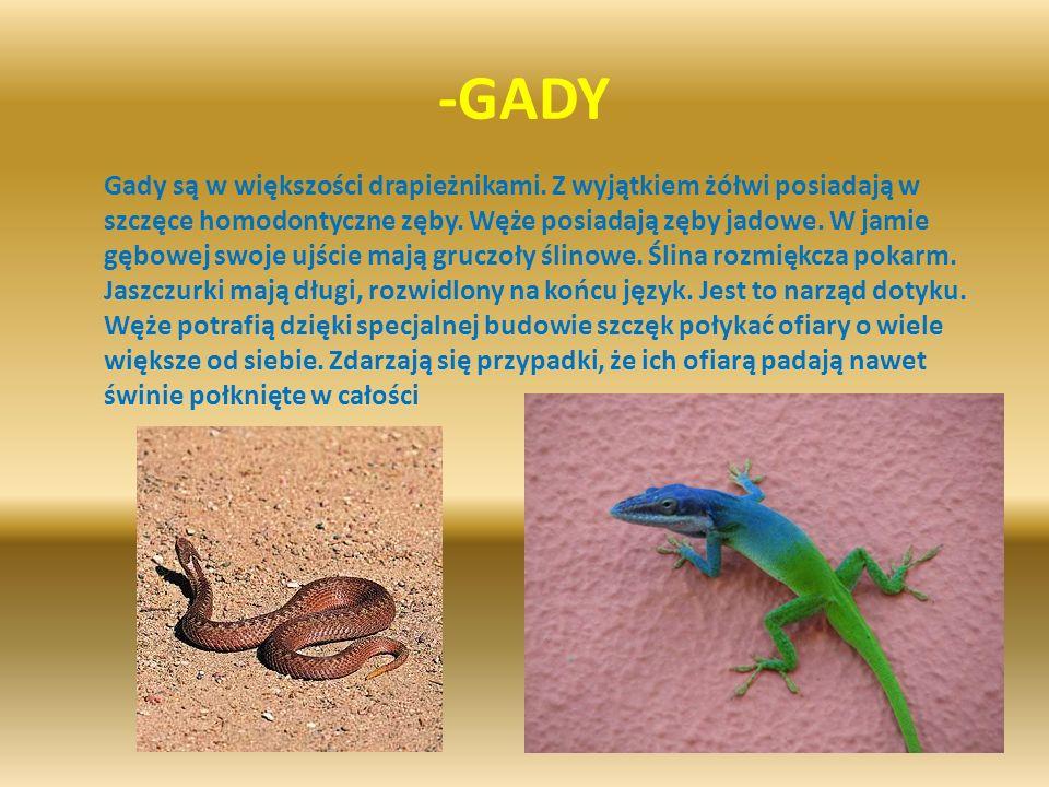 -GADY