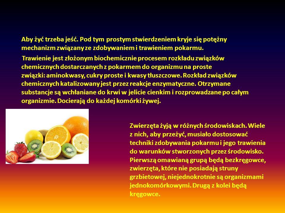 Aby żyć trzeba jeść. Pod tym prostym stwierdzeniem kryje się potężny mechanizm związany ze zdobywaniem i trawieniem pokarmu.