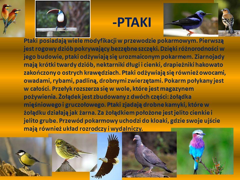 -PTAKI