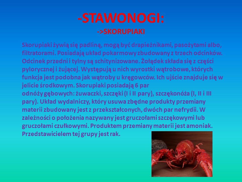 -STAWONOGI: ->SKORUPIAKI