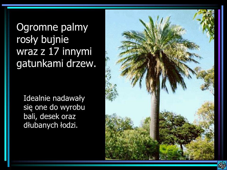Ogromne palmy rosły bujnie wraz z 17 innymi gatunkami drzew.