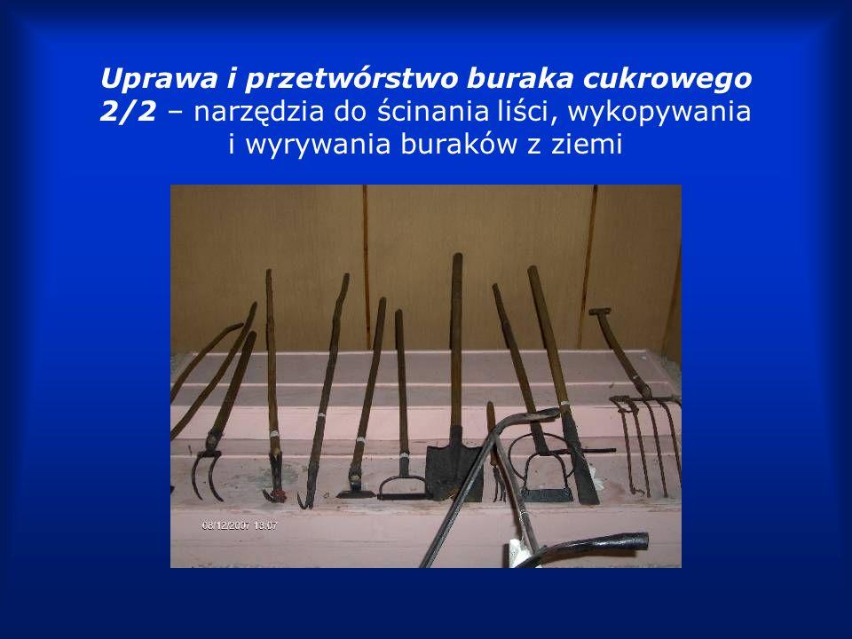 Uprawa i przetwórstwo buraka cukrowego 2/2 – narzędzia do ścinania liści, wykopywania i wyrywania buraków z ziemi