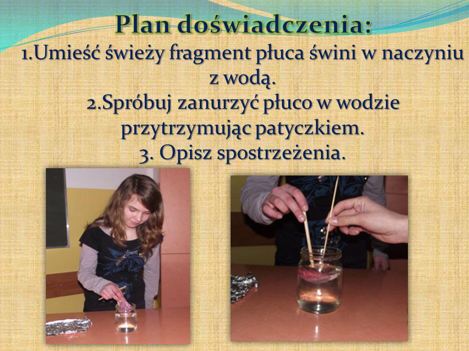 Plan doświadczenia: 1.Umieść świeży fragment płuca świni w naczyniu z wodą.