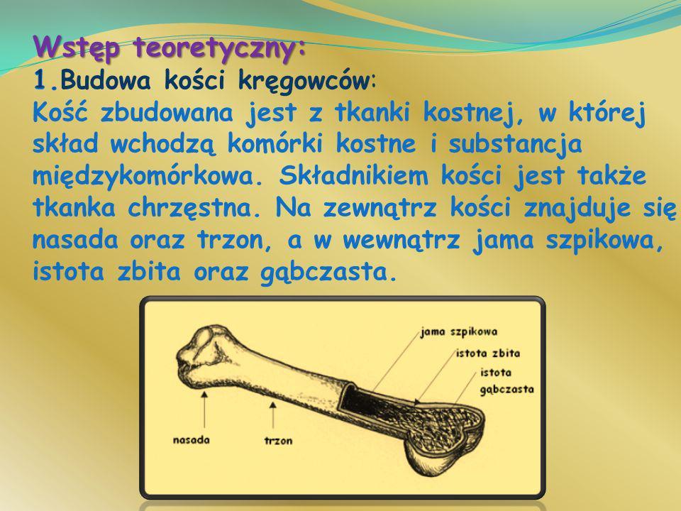Wstęp teoretyczny: 1.Budowa kości kręgowców: Kość zbudowana jest z tkanki kostnej, w której skład wchodzą komórki kostne i substancja międzykomórkowa.
