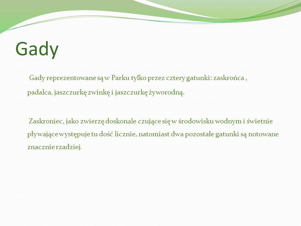 Gady Gady reprezentowane są w Parku tylko przez cztery gatunki: zaskrońca , padalca, jaszczurkę zwinkę i jaszczurkę żyworodną.