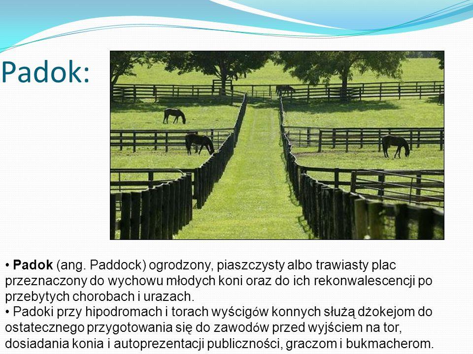 Padok: