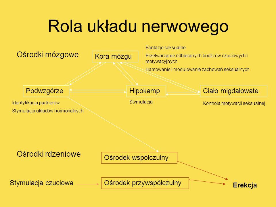 Rola układu nerwowego Ośrodki mózgowe Ośrodki rdzeniowe Kora mózgu