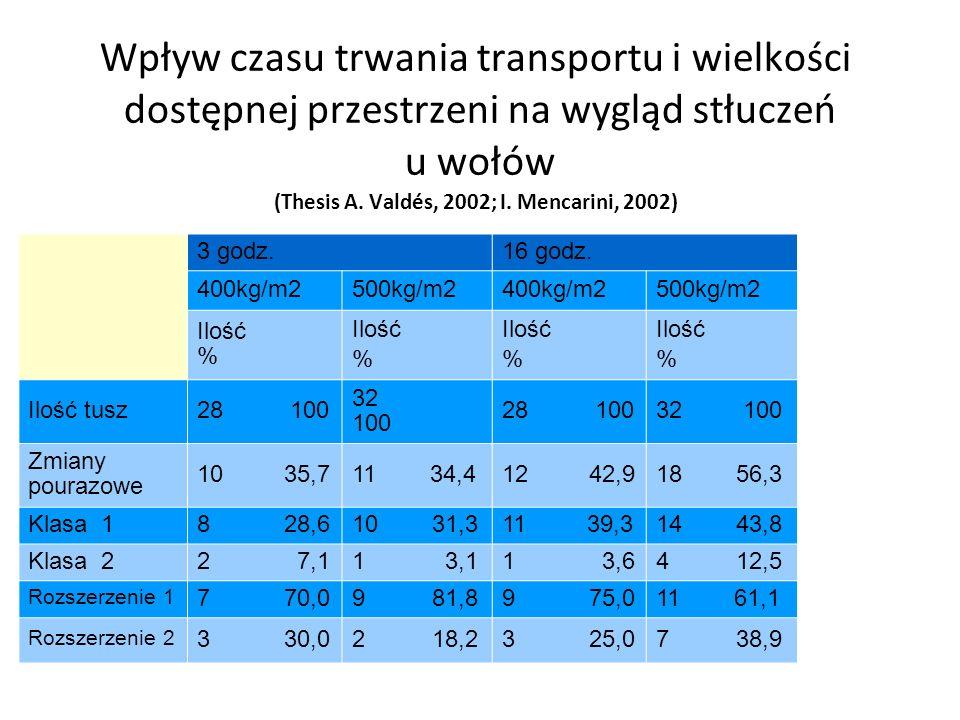 Wpływ czasu trwania transportu i wielkości dostępnej przestrzeni na wygląd stłuczeń u wołów (Thesis A. Valdés, 2002; I. Mencarini, 2002)