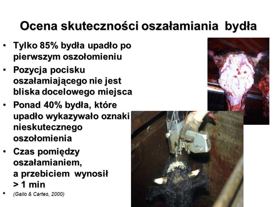 Ocena skuteczności oszałamiania bydła