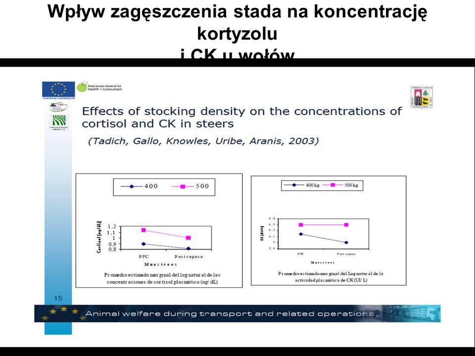 Wpływ zagęszczenia stada na koncentrację kortyzolu i CK u wołów