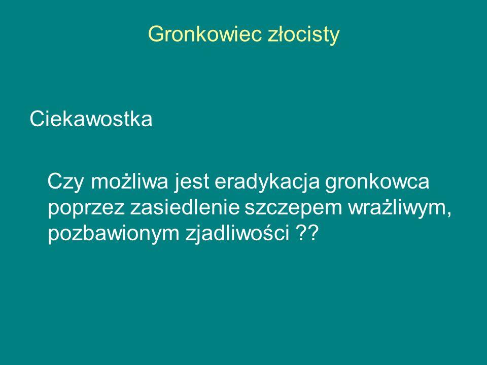 Gronkowiec złocisty Ciekawostka.