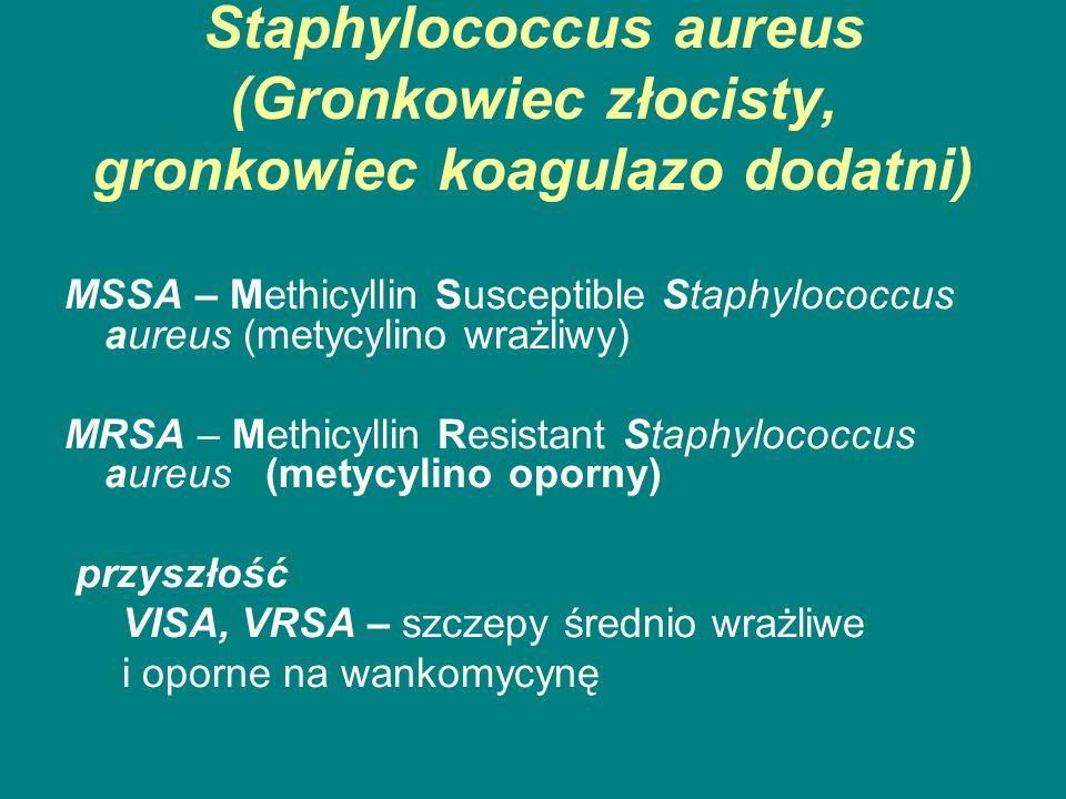 Staphylococcus aureus (Gronkowiec złocisty, gronkowiec koagulazo dodatni)