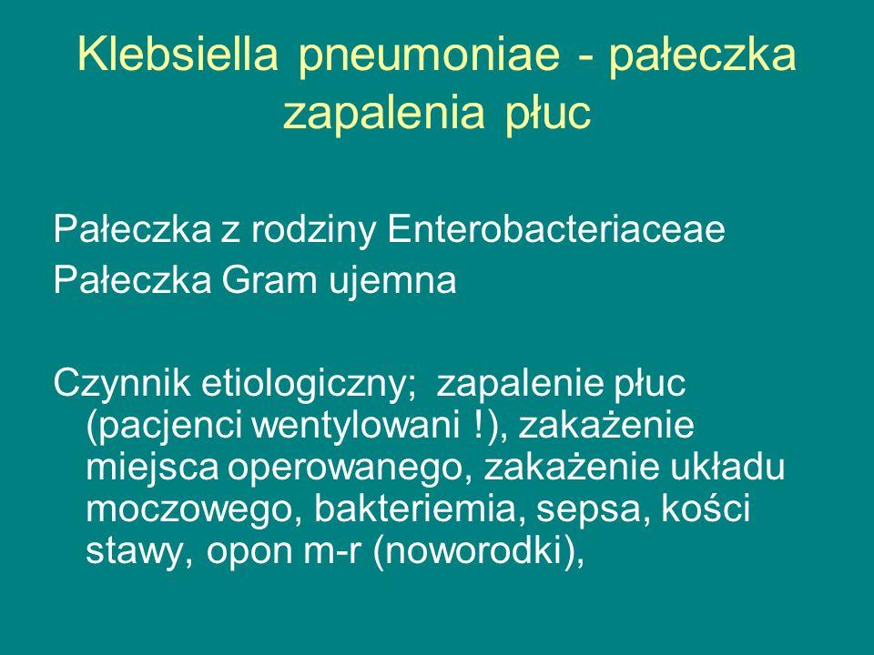 Klebsiella pneumoniae - pałeczka zapalenia płuc