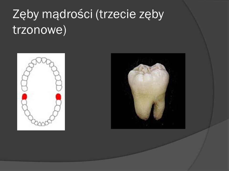 Zęby mądrości (trzecie zęby trzonowe)