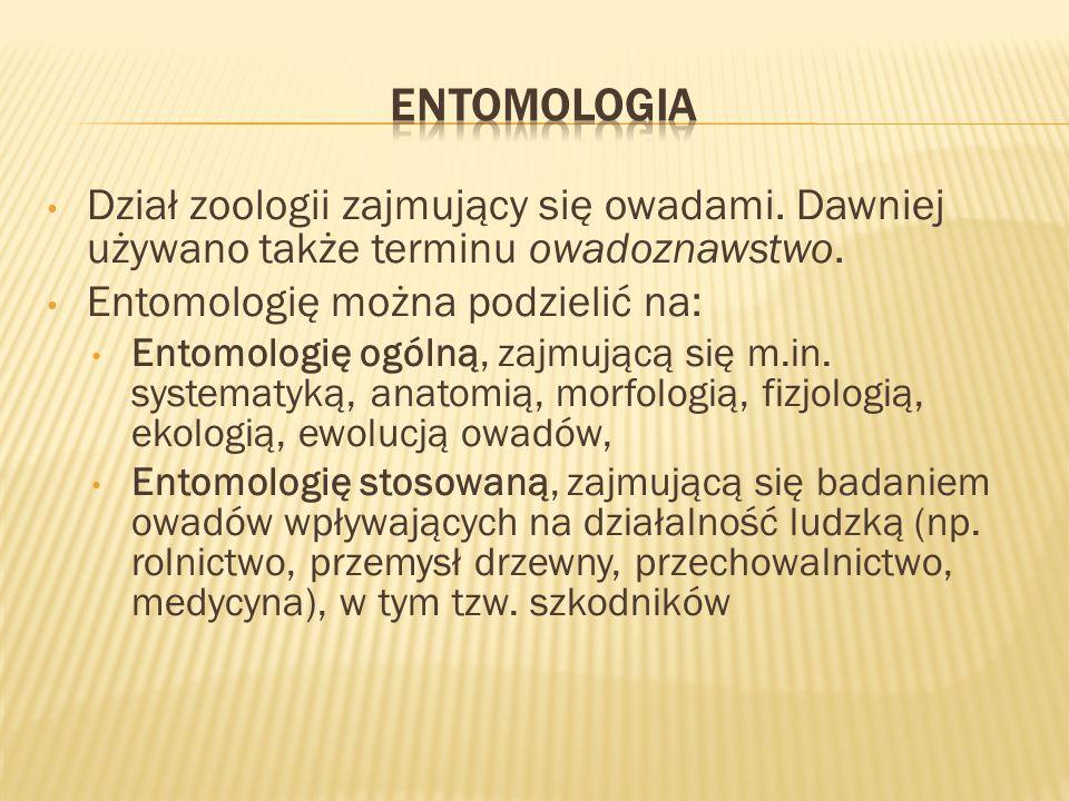Entomologia Dział zoologii zajmujący się owadami. Dawniej używano także terminu owadoznawstwo. Entomologię można podzielić na: