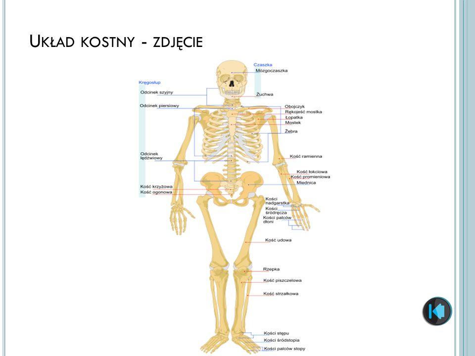 Układ kostny - zdjęcie