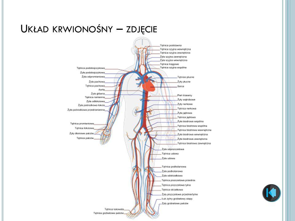 Układ krwionośny – zdjęcie