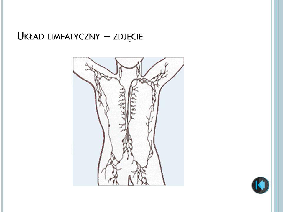 Układ limfatyczny – zdjęcie