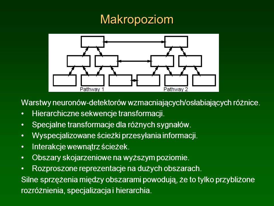 Makropoziom Warstwy neuronów-detektorów wzmacniających/osłabiających różnice. Hierarchiczne sekwencje transformacji.