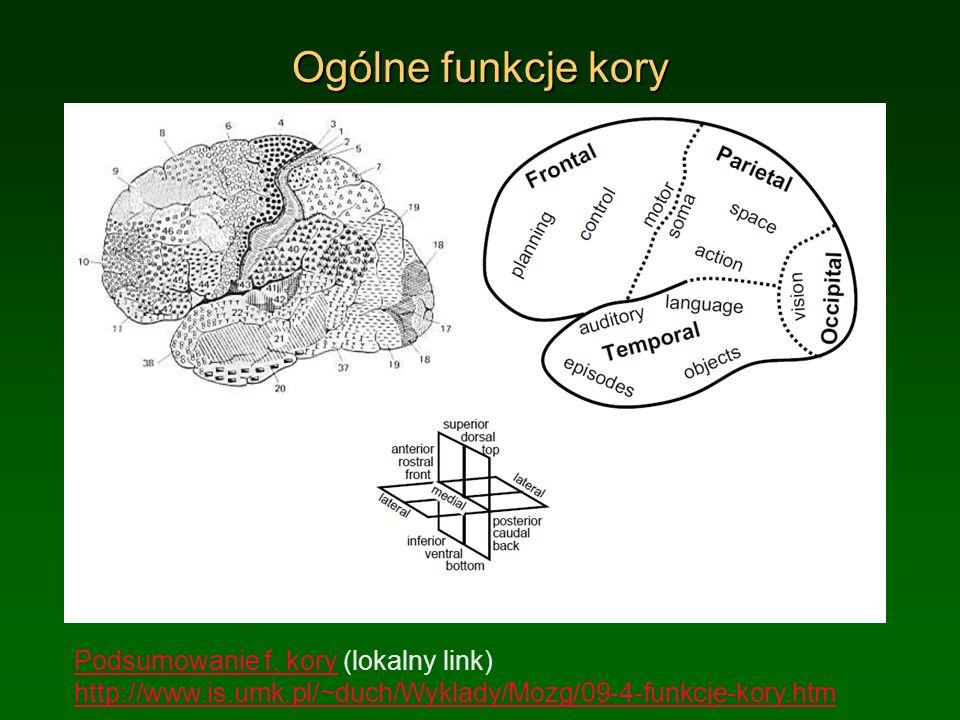 Ogólne funkcje kory Podsumowanie f. kory (lokalny link) http://www.is.umk.pl/~duch/Wyklady/Mozg/09-4-funkcje-kory.htm.