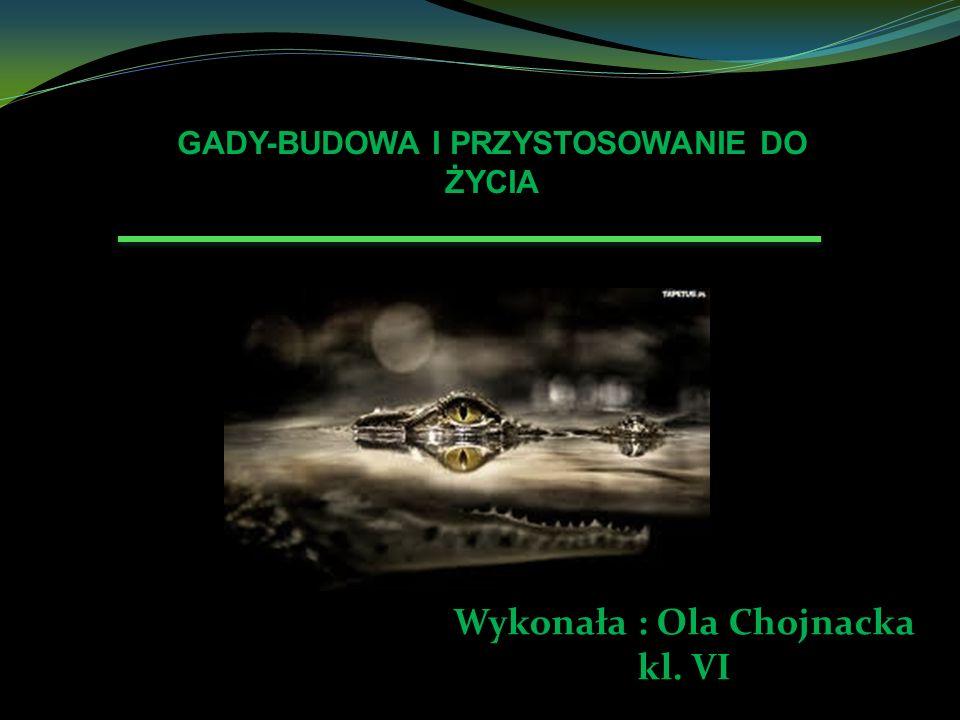 GADY-BUDOWA I PRZYSTOSOWANIE DO ŻYCIA Wykonała : Ola Chojnacka kl. VI