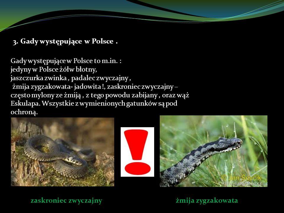 3. Gady występujące w Polsce .