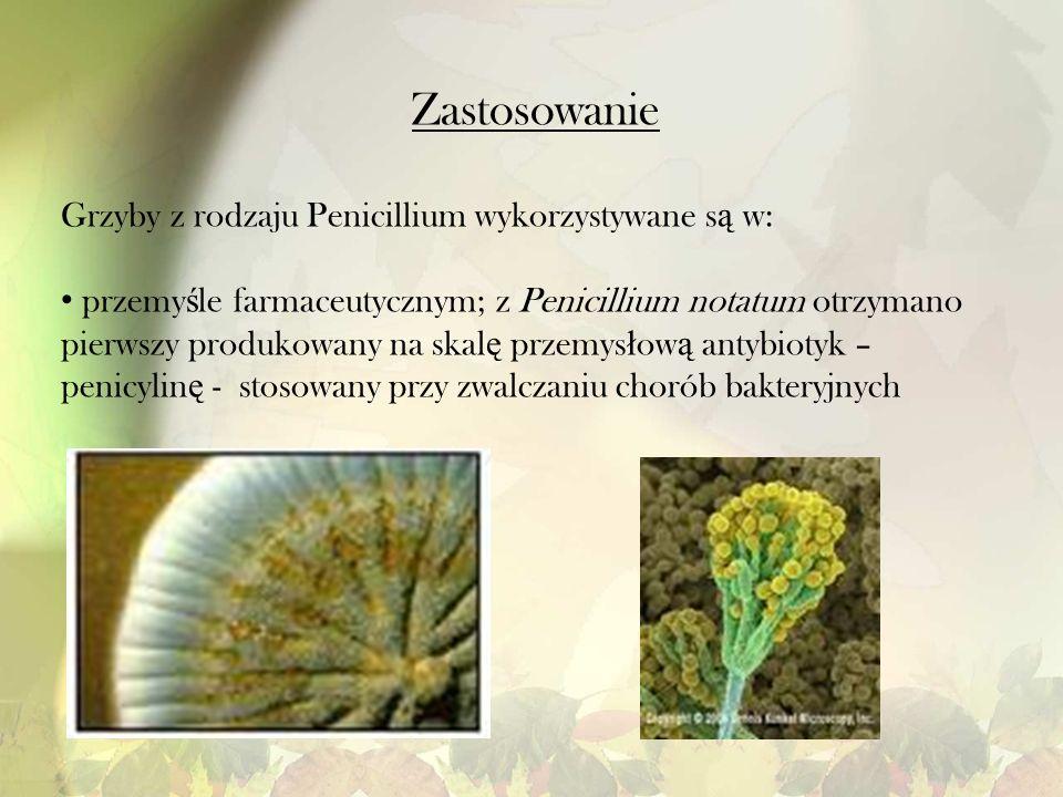 Zastosowanie Grzyby z rodzaju Penicillium wykorzystywane są w:
