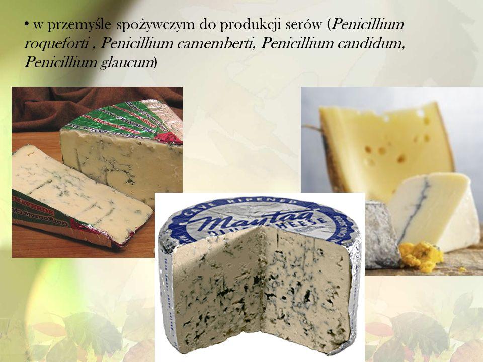 w przemyśle spożywczym do produkcji serów (Penicillium roqueforti , Penicillium camemberti, Penicillium candidum, Penicillium glaucum)
