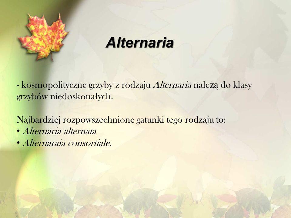 Alternaria kosmopolityczne grzyby z rodzaju Alternaria należą do klasy grzybów niedoskonałych. Najbardziej rozpowszechnione gatunki tego rodzaju to:
