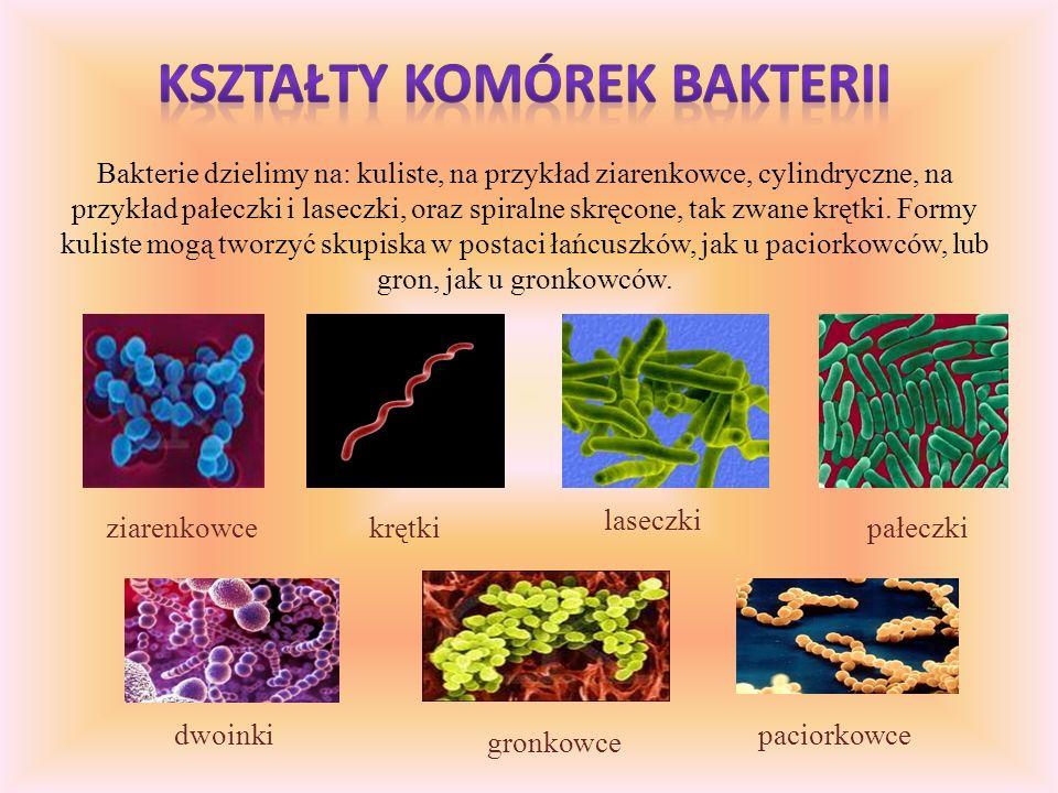 Kształty komórek bakterii