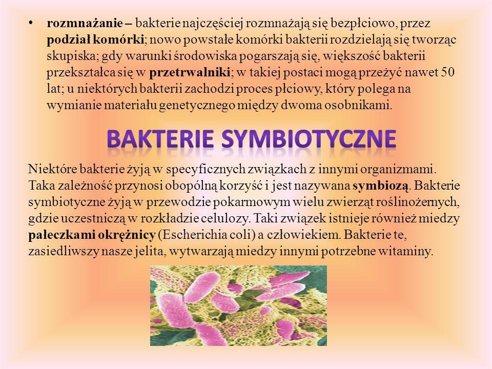Bakterie symbiotyczne