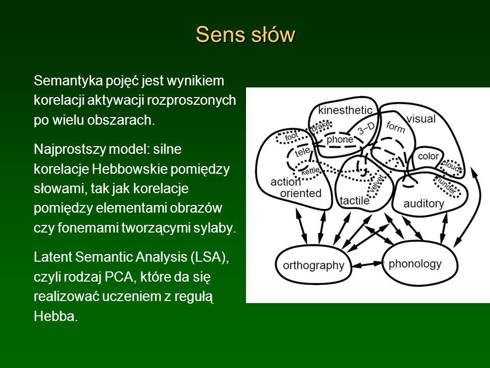 Sens słów Semantyka pojęć jest wynikiem korelacji aktywacji rozproszonych po wielu obszarach.
