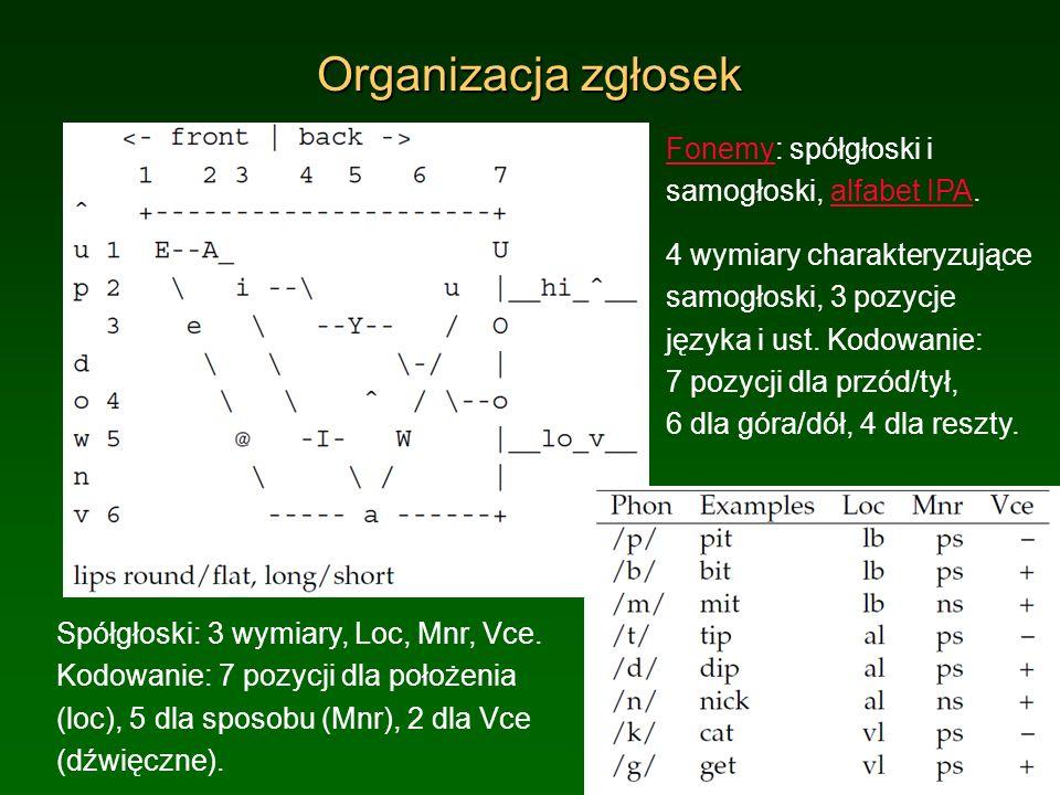 Organizacja zgłosek Fonemy: spółgłoski i samogłoski, alfabet IPA.