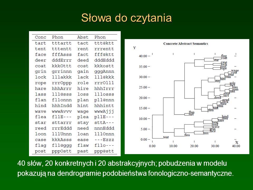 Słowa do czytania 40 słów, 20 konkretnych i 20 abstrakcyjnych; pobudzenia w modelu pokazują na dendrogramie podobieństwa fonologiczno-semantyczne.