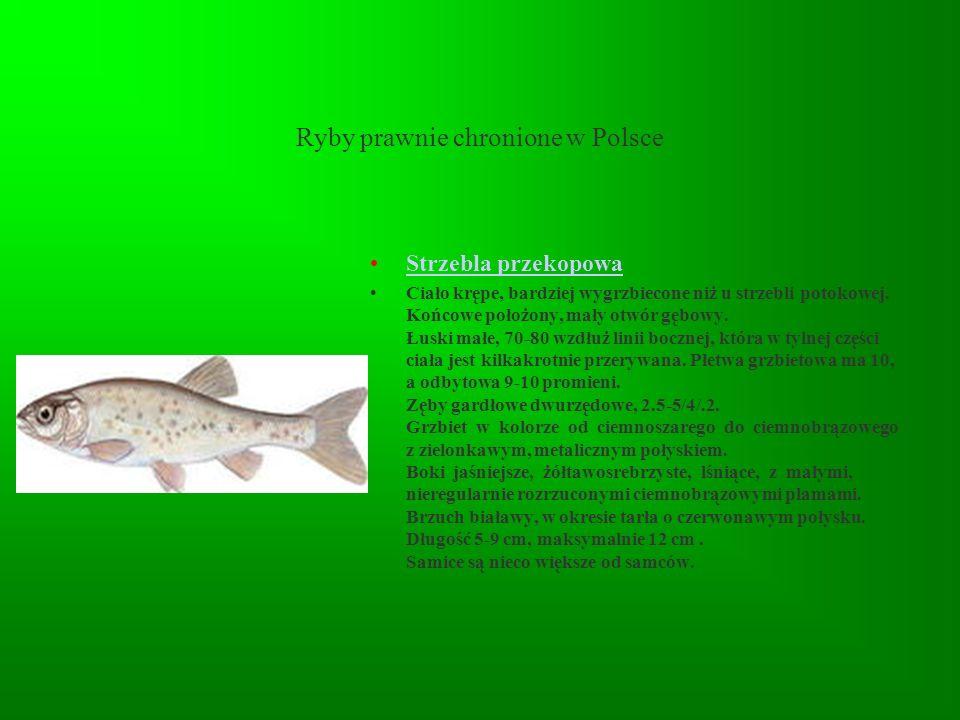 Ryby prawnie chronione w Polsce