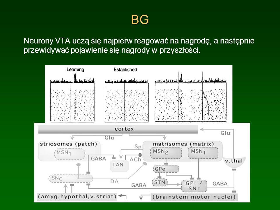 BG Neurony VTA uczą się najpierw reagować na nagrodę, a następnie przewidywać pojawienie się nagrody w przyszłości.