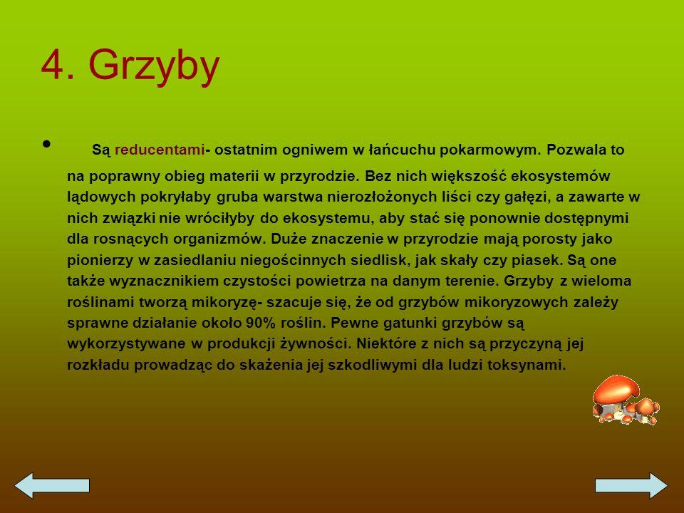 4. Grzyby