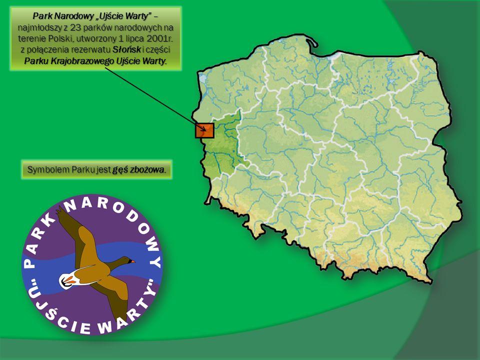 """Park Narodowy """"Ujście Warty – najmłodszy z 23 parków narodowych na terenie Polski, utworzony 1 lipca 2001r. z połączenia rezerwatu Słońsk i części Parku Krajobrazowego Ujście Warty."""