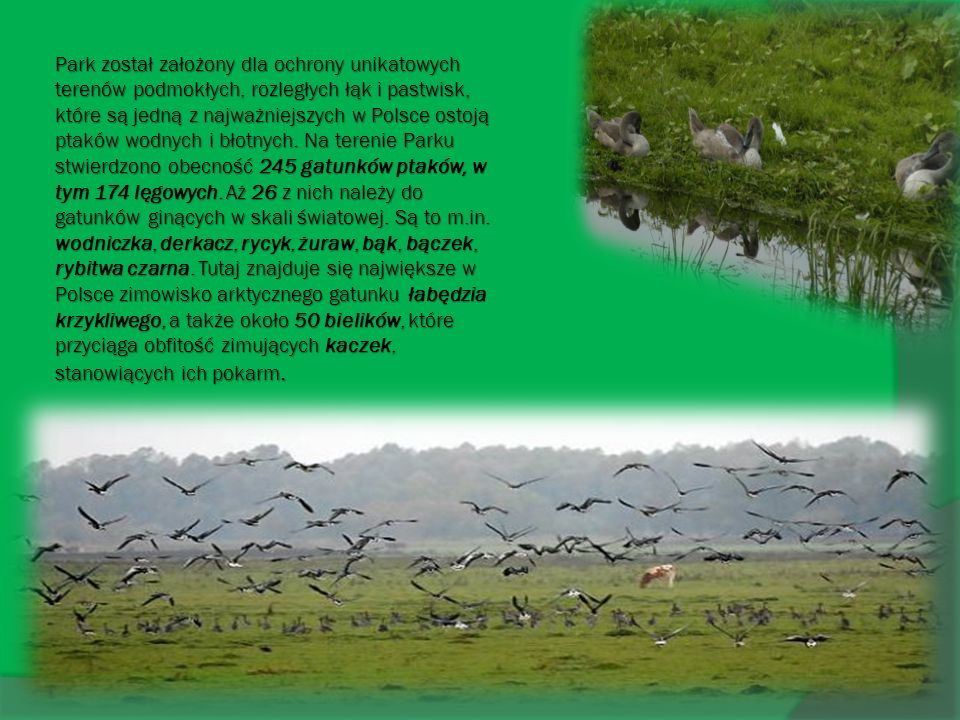 Park został założony dla ochrony unikatowych terenów podmokłych, rozległych łąk i pastwisk, które są jedną z najważniejszych w Polsce ostoją ptaków wodnych i błotnych.