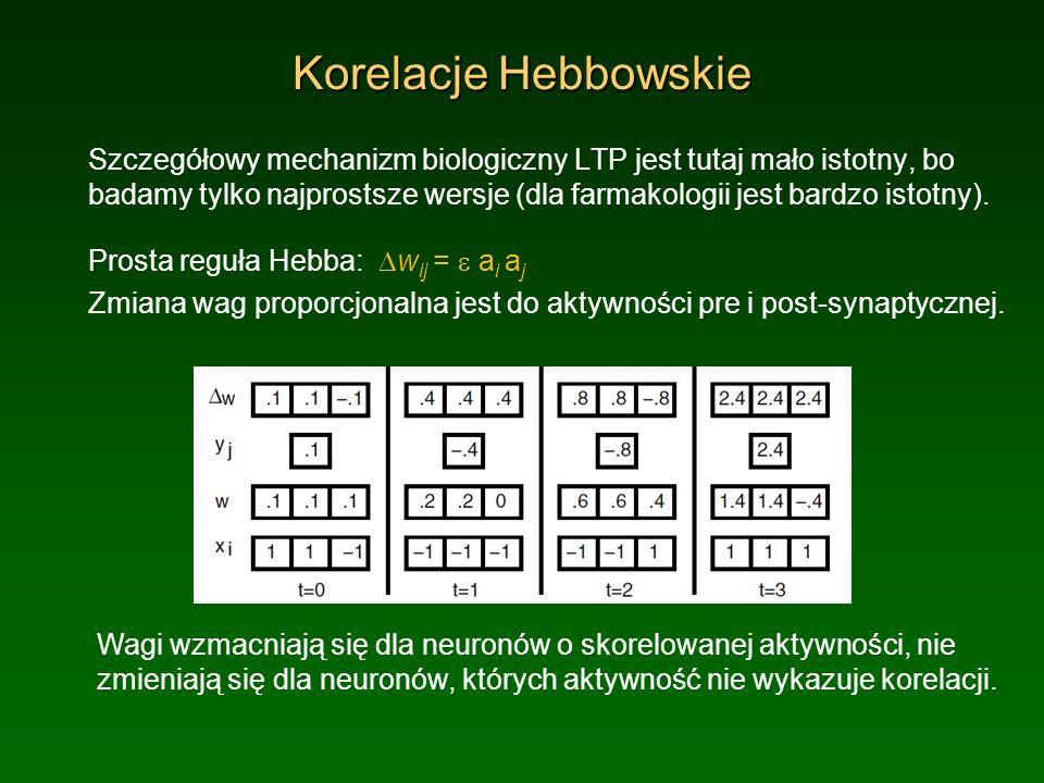 Korelacje Hebbowskie